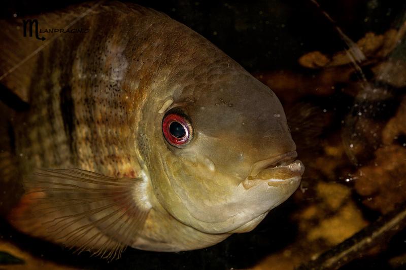 quelques poissons de chez richard Dsc09215