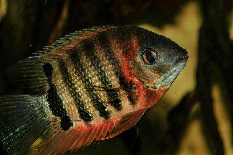 quelques poissons de chez richard Dsc09216
