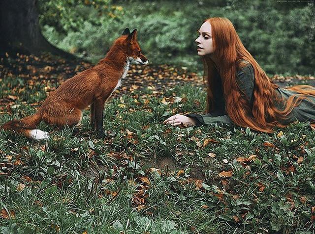 Elle créer des clichés sublimes avec des renards... 120ale10
