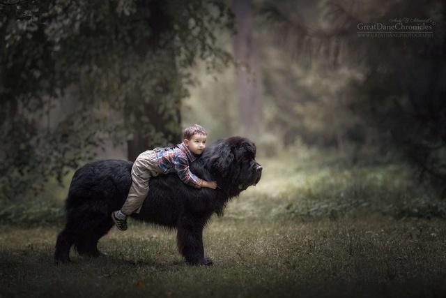 De sublimes photos d'enfants tout-petits et leurs gros chiens 120and10