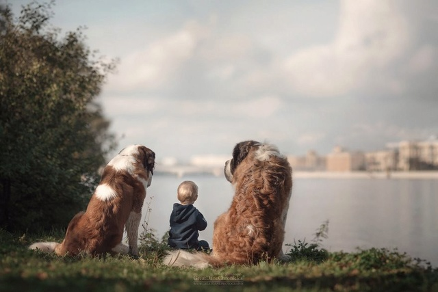 De sublimes photos d'enfants tout-petits et leurs gros chiens 1210