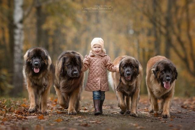 De sublimes photos d'enfants tout-petits et leurs gros chiens 1810