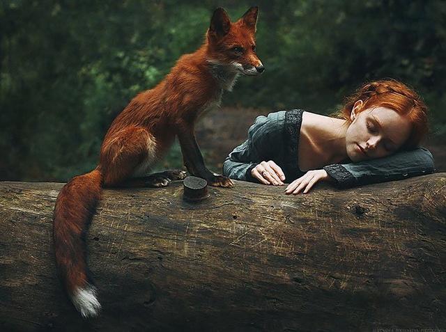 Elle créer des clichés sublimes avec des renards... 211