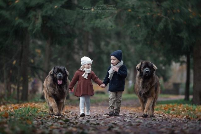 De sublimes photos d'enfants tout-petits et leurs gros chiens 310