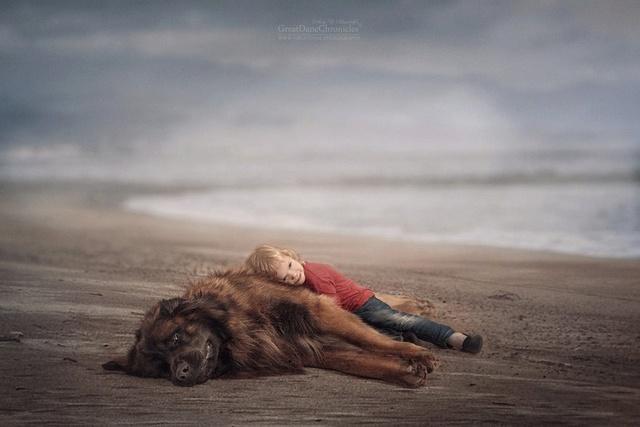 De sublimes photos d'enfants tout-petits et leurs gros chiens 410