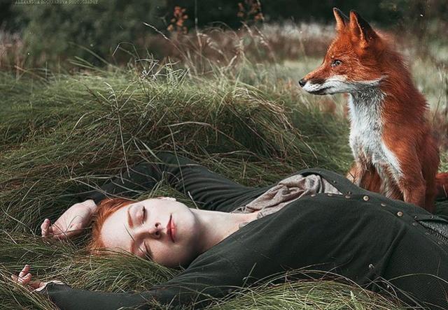 Elle créer des clichés sublimes avec des renards... 611