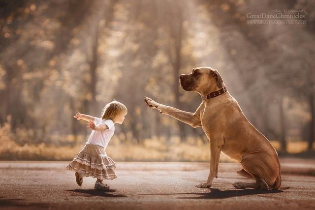 De sublimes photos d'enfants tout-petits et leurs gros chiens 810