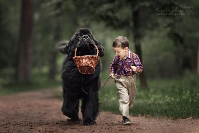 De sublimes photos d'enfants tout-petits et leurs gros chiens 910