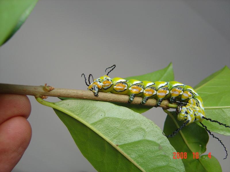 Quel est le plus beau papillon du monde ? - Page 2 07_10_10