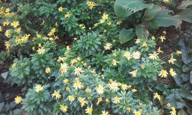 le jardin s'endort ... quoique Rps20198