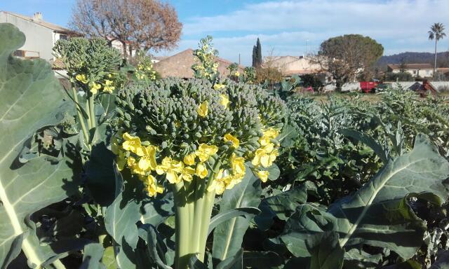 le jardin s'endort ... quoique Rps20210