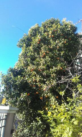 Baies et fruits d'hiver Rps20238