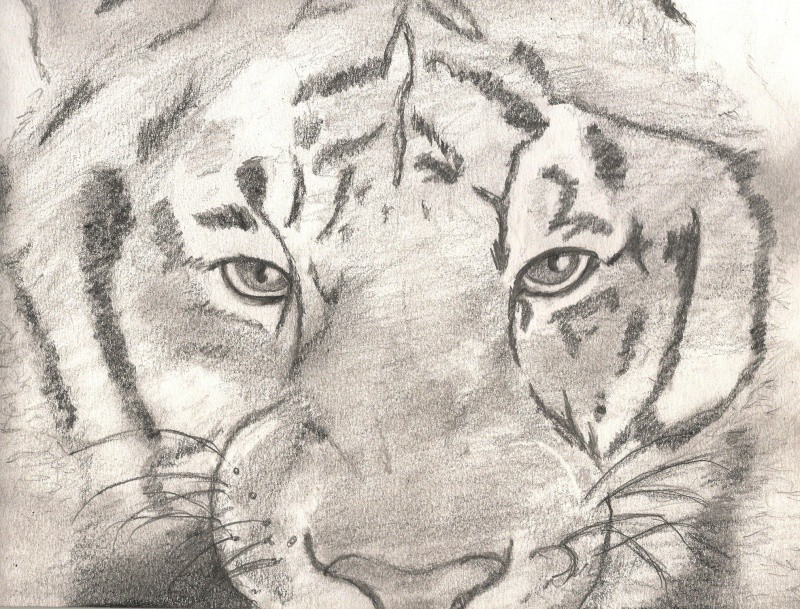 dessins d'animaux Numari10