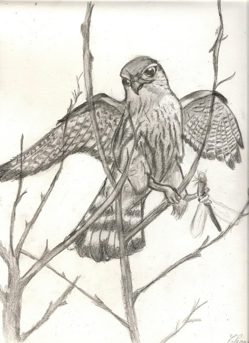 dessins d'animaux Numari11