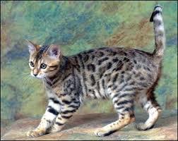 Thunderheart's WindClan Kitties! Gorse10