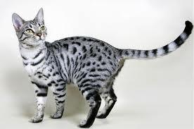 Thunder's ThunderClan kitties! Real_d10
