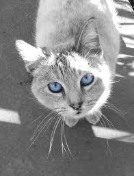 Thunder's RiverClan Kitties! Ss10