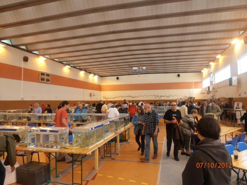 Congrès AFC 5/6/7 novembre 2012 Pa070020