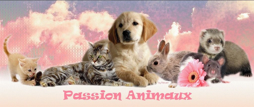 Passion-Animaux