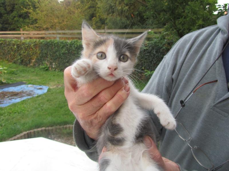 Praline, jolie chatonne de 3 mois, tricolore (250269802112279) adoptée le 21/10/12 Img_1919