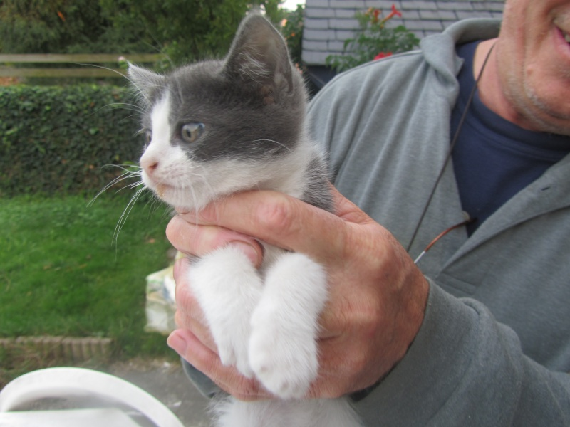 Praline, jolie chatonne de 3 mois, tricolore (250269802112279) adoptée le 21/10/12 Img_1926