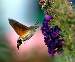 Wonderful World of Nature Moth10