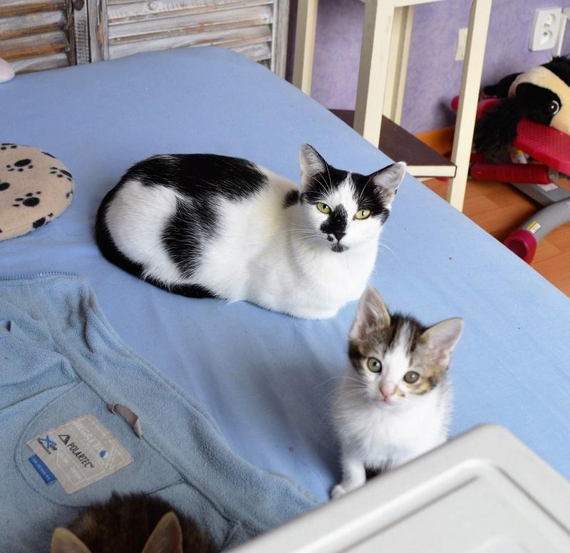Mafille - MAFILLE, chatonne blanche et tigrée, née le 01/09/16 Dsc_0033