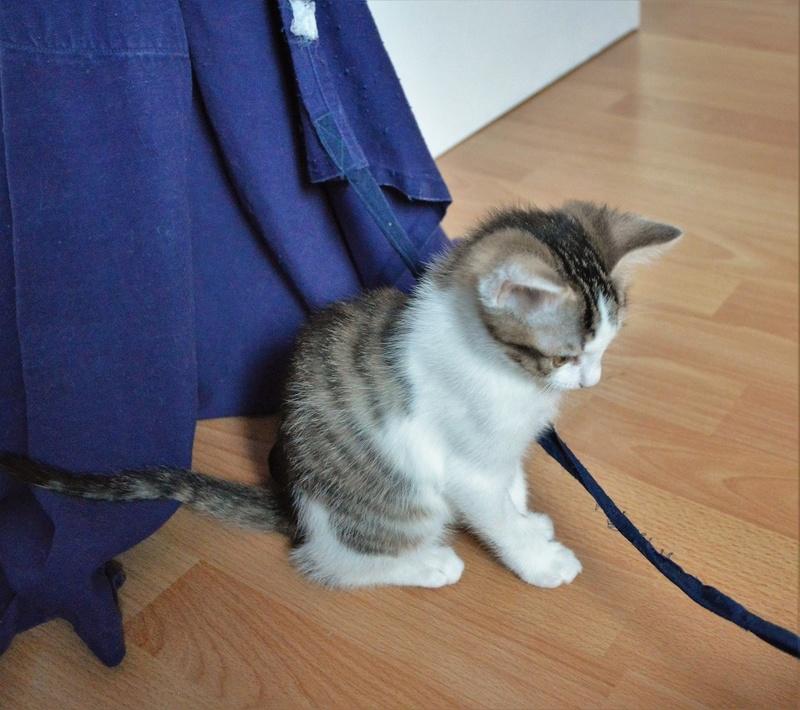 Mafille - MAFILLE, chatonne blanche et tigrée, née le 01/09/16 Dsc_310