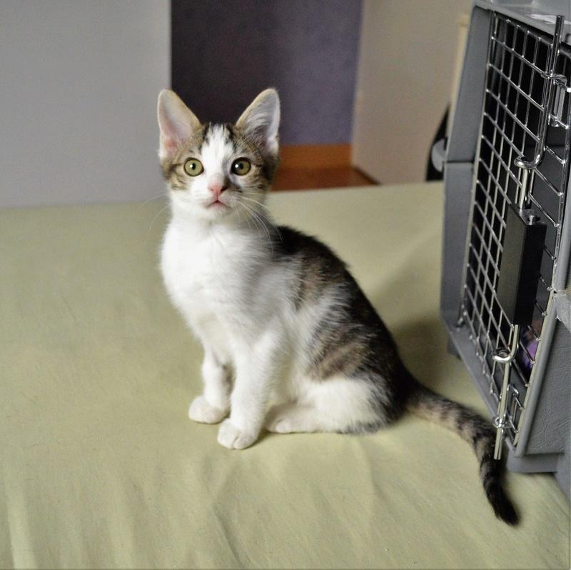 Mafille - MAFILLE, chatonne blanche et tigrée, née le 01/09/16 Dsc_910