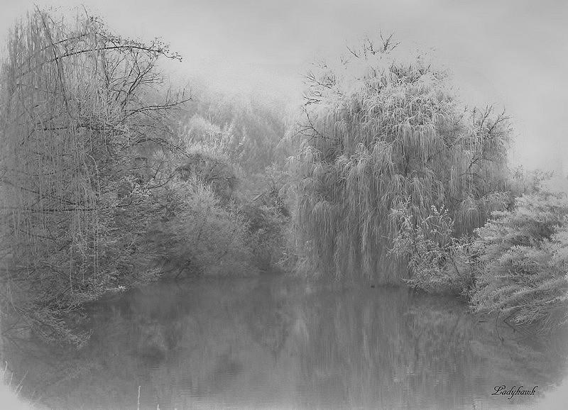 la vague de froid en Lorraine Img_6010