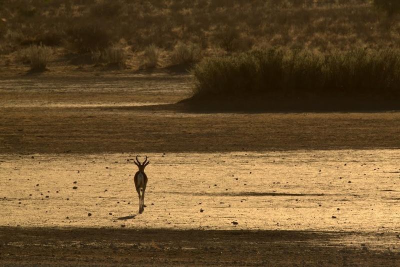 Two Rivers, parc transfrontalier de Kgalagadi en Afrique du Sud. 66970510