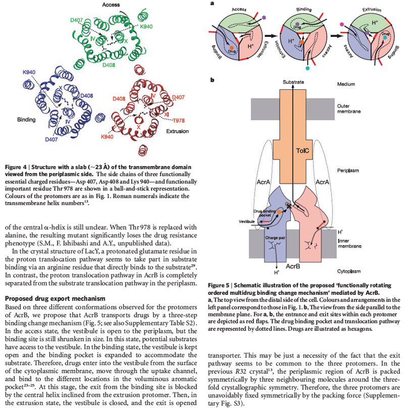 How Cell membrane proteins point to the requirement of planning, intelligence and design for their biosynthesis specific function, and insertion in the cell membrane Acrb_e15