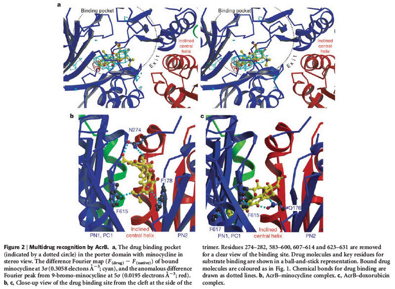 How Cell membrane proteins point to the requirement of planning, intelligence and design for their biosynthesis specific function, and insertion in the cell membrane Acrb_e16