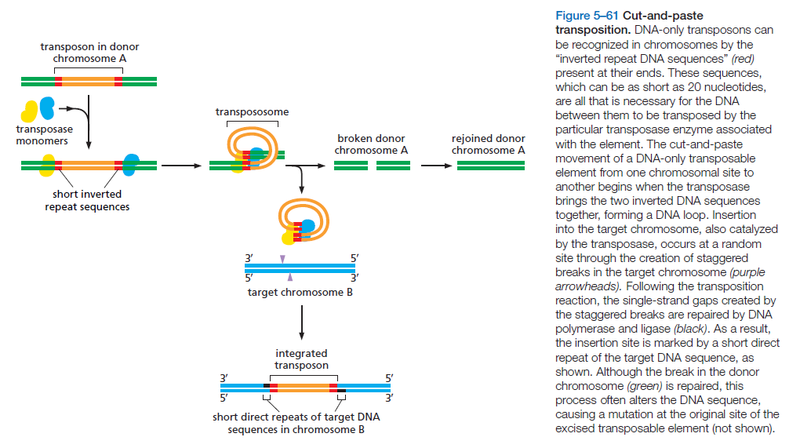 Transposons and Retrotransposons Cut-an10