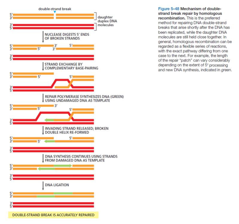 Transposons and Retrotransposons Homolo10