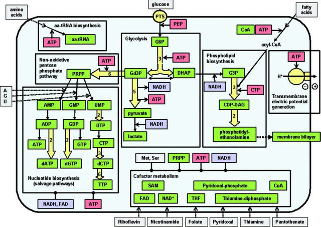 How Cellular Enzymatic and Metabolic networks  point to design Minima10