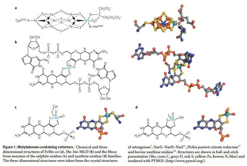 Molybdenum, essential for life Molybd10