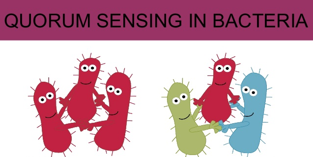 Bacteria Use Sophisticated Language, and work in teams Quorum10