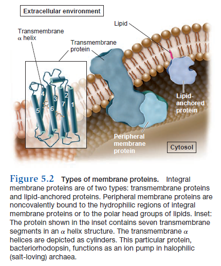 How Cell membrane proteins point to the requirement of planning, intelligence and design for their biosynthesis specific function, and insertion in the cell membrane Types_10