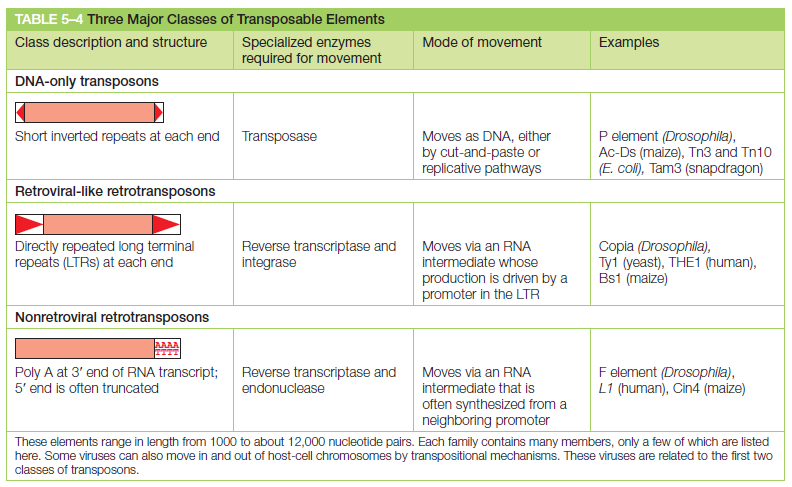 Transposons and Retrotransposons Wrewre11