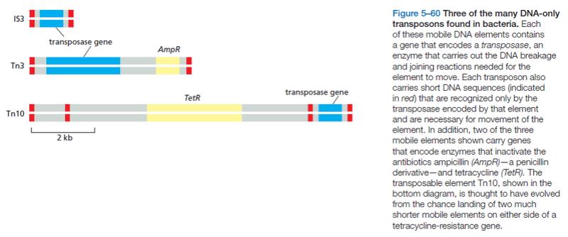 Transposons and Retrotransposons Wrewre12