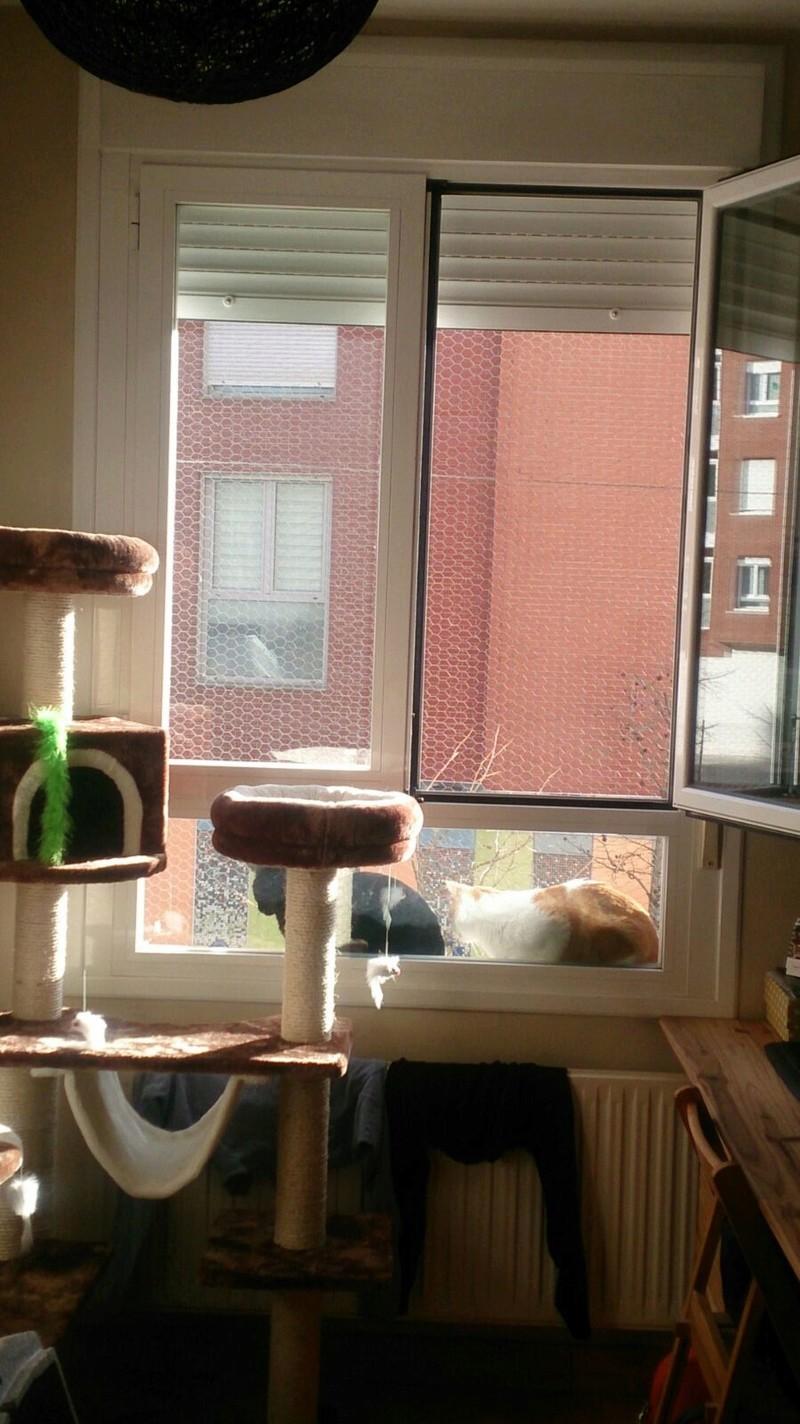 Resumen de ideas para mosquiteras y redes ventanas y balcón para gatos. - Página 2 7455dd10
