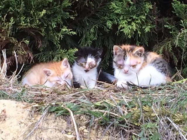 CESCA. La unión de Apa Sos Vitoria y Esperanza Felina por los gatos callejeros de Álava - Página 7 Samani10