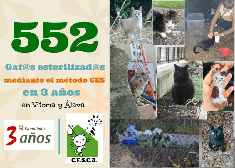 CESCA. La unión de Apa Sos Vitoria y Esperanza Felina por los gatos callejeros de Álava - Página 7 Tercer10