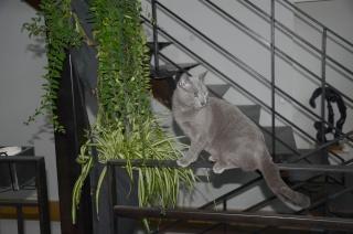 Les plantes toxiques et le chat 2013_010
