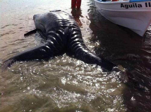 Nature étonnante et inconnue des fonds des océans Conjoi10