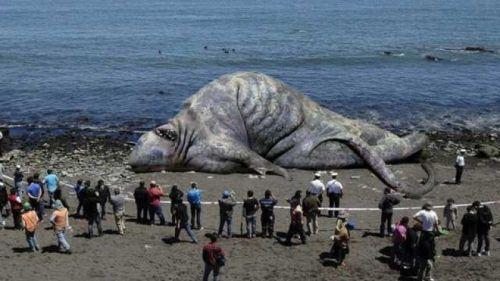 Nature étonnante et inconnue des fonds des océans Dead-m10