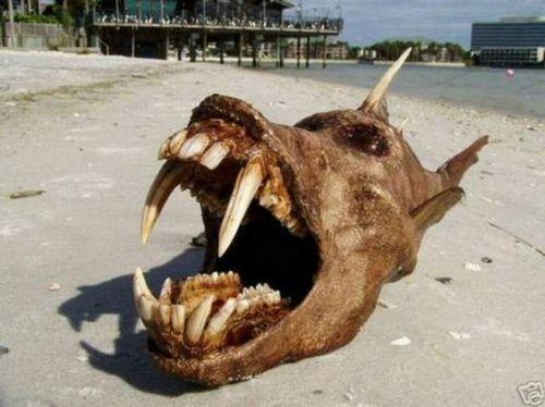 Nature étonnante et inconnue des fonds des océans Strang10