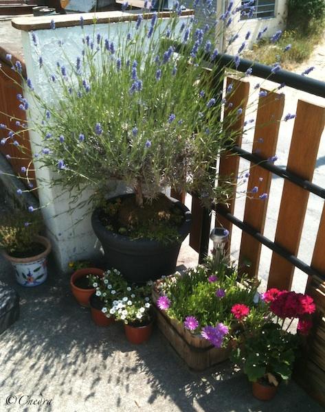 Photos de nos jardins - Page 2 Terras10