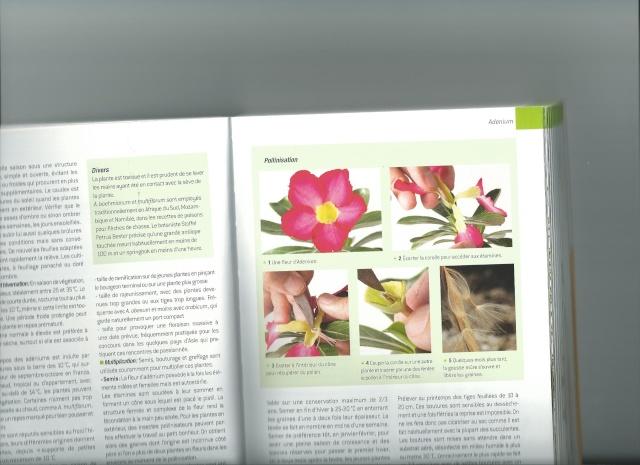 pollinisation adenium Scan0010